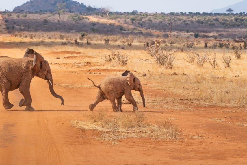 kena-slon