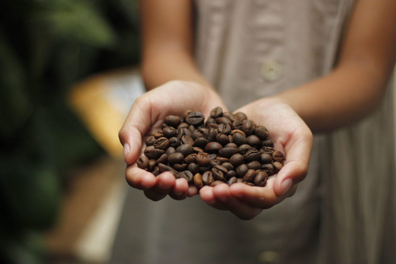 kava-a-jeji-historie-2