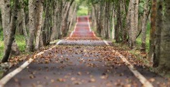 podzimni-prochazka