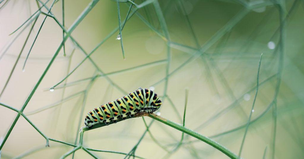 Hmyz se stal neodmyslitelnou součástí jídelníčku ve sto třinácti zemích světa.