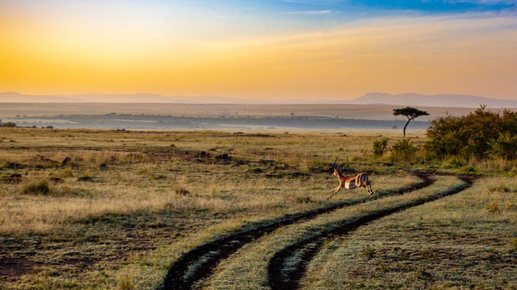 Kdo se ocitne v Keni, nemůže si odpustit výlet do jednoho z národních parků.