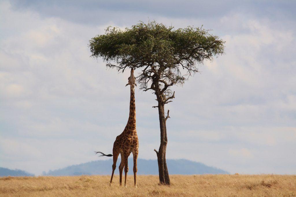 K vidění jsou žirafy, gepardi, lvi, sloni i rozmanité druhy ptactva.