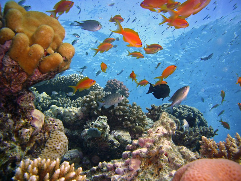 diving-1656482-1280-2754033